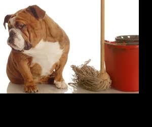 How pets can lower the value of your property