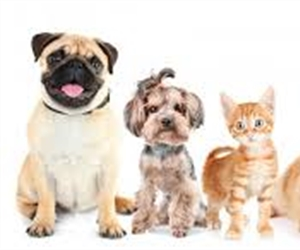 Pet Rental laws in Australia